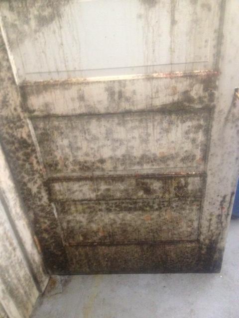 Mold on door